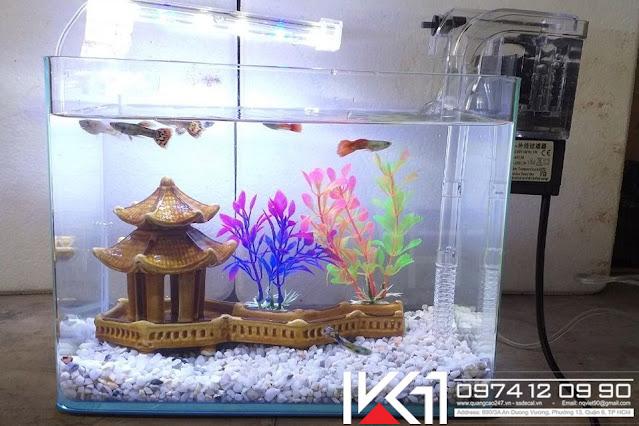 Bể cá mini để bàn văn phòng