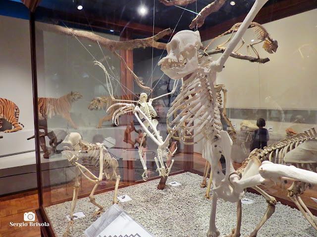 Vista de parte da exposição permanente do Museu de Zoologia da USP - Ipiranga