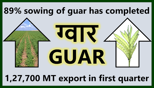 Guar crop sowing has completed on 89% on target guar sowing area, Guar, guar gum, guar price, guar gum price, guar demand, guar gum demand, guar seed production, guar seed stock, guar seed consumption, guar gum cultivation, guar gum cultivation in india, Guar gum farming, guar gum export from india , guar seed export, guar gum export, guar gum farming, guar gum cultivation consultancy, today guar price, today guar gum price, ग्वार, ग्वार गम, ग्वार मांग, ग्वार गम निर्यात 2018-2019, ग्वार गम निर्यात -2019, ग्वार उत्पादन, ग्वार कीमत, ग्वार गम मांग, Guar Gum, Guar seed, guar , guar gum, guar gum export from india, guar gum export to USA, guar demand USA, guar future price, guar future demand, guar production 2019, guar gum demand 2019, guar, guar gum, cluster beans, guar gum powder, guar gum price, guar gum uses, ncdex guar, guar price, guar gum price today, cyamopsis tetragonoloba, ncdex guar gum price, guar beans, guar rate today