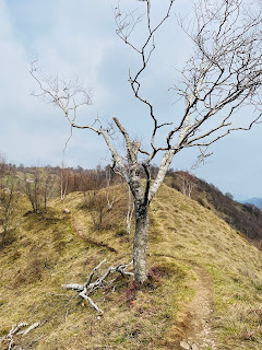 A broken birch tree near Corna Bianca.