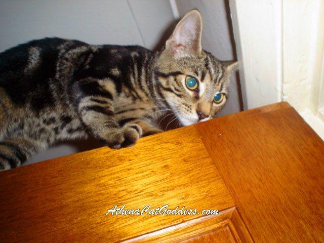 tabby kitten on the door
