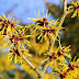 10 Practical Uses for Witch Hazel That Should Make it A Staple in Our Medicine Cabinet