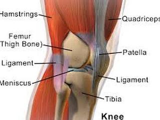 Faktor risiko Terjadinya Cedera Lutut yang Utama