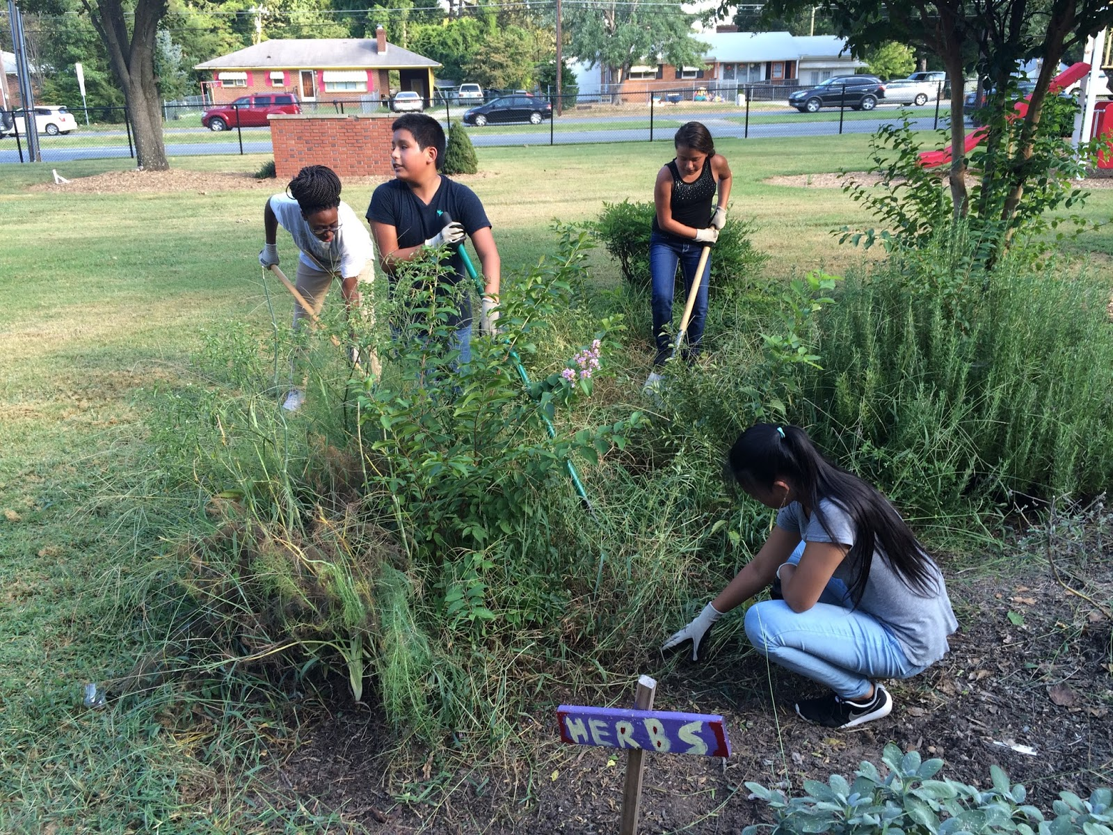 Sharing Our Guilford County School Gardens Students At High School Ahead Academy Clean Up Herb