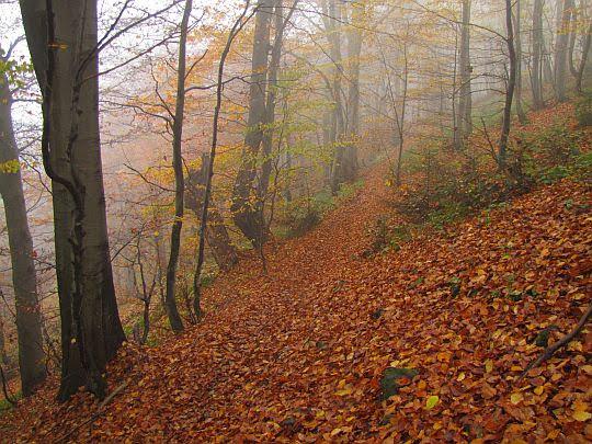 Stok opadający stromo do doliny Chyrowskiego Potoku.