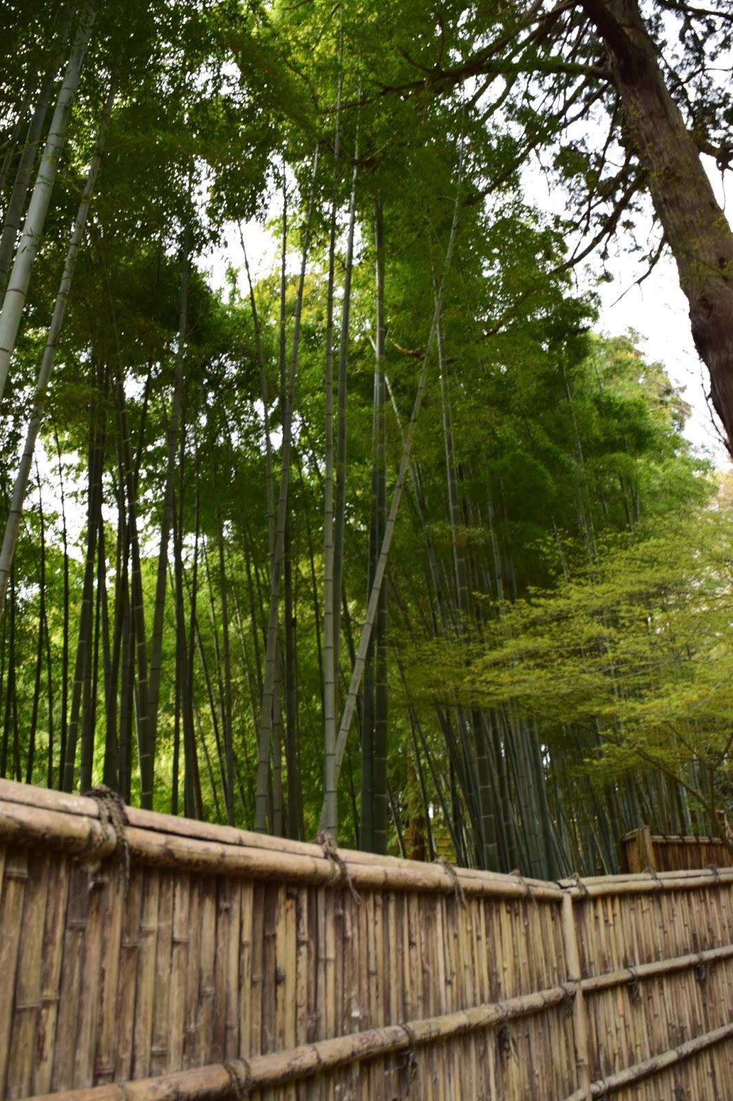 bamboo Ginkakuji