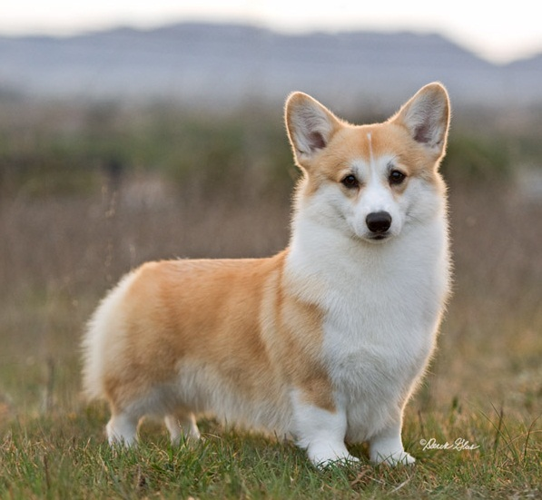 DOG SHOW POOP: 2012-11-11