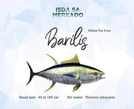 Isda Barilis Tambakol Tambakul (Yellow Fin Tuna) yellowfin fish