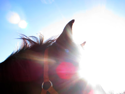Silhouette-at-The-Thomas-School-of-Horsemanship