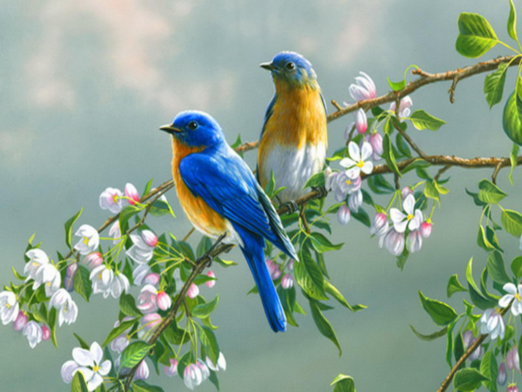Free Bluebird Wallpaper For Desktop: Beautiful Home And Natural Graphic Design