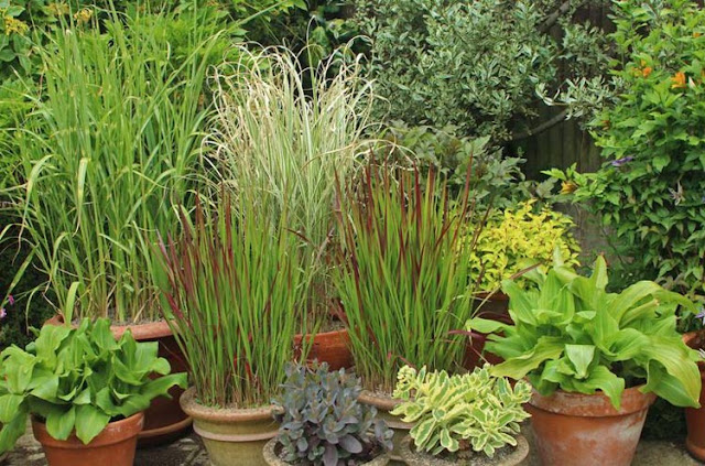 Some notes on planting ornamental grasses in the cottage courtyard