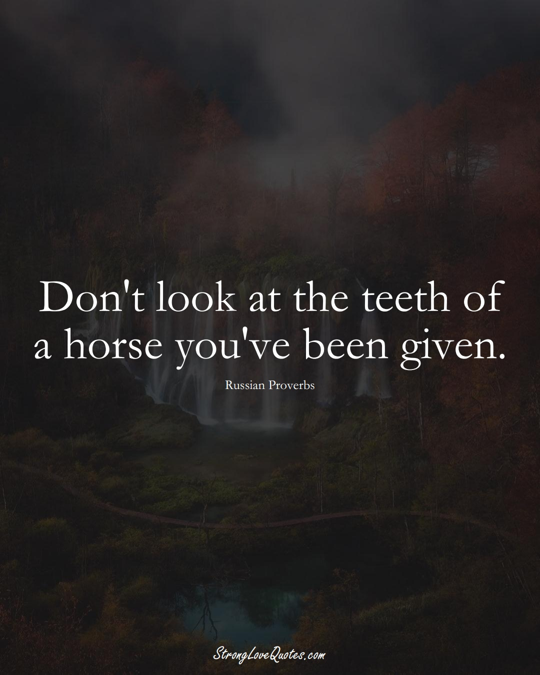 Don't look at the teeth of a horse you've been given. (Russian Sayings);  #AsianSayings