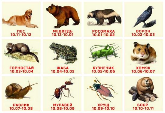 Один из таких – это древне-славянский гороскоп животных по дате рождения.