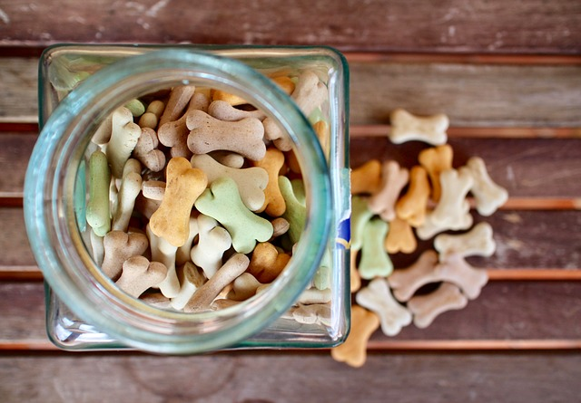 Your Dog's Diet plan: Canned Canine Food vs. Dry Kibble