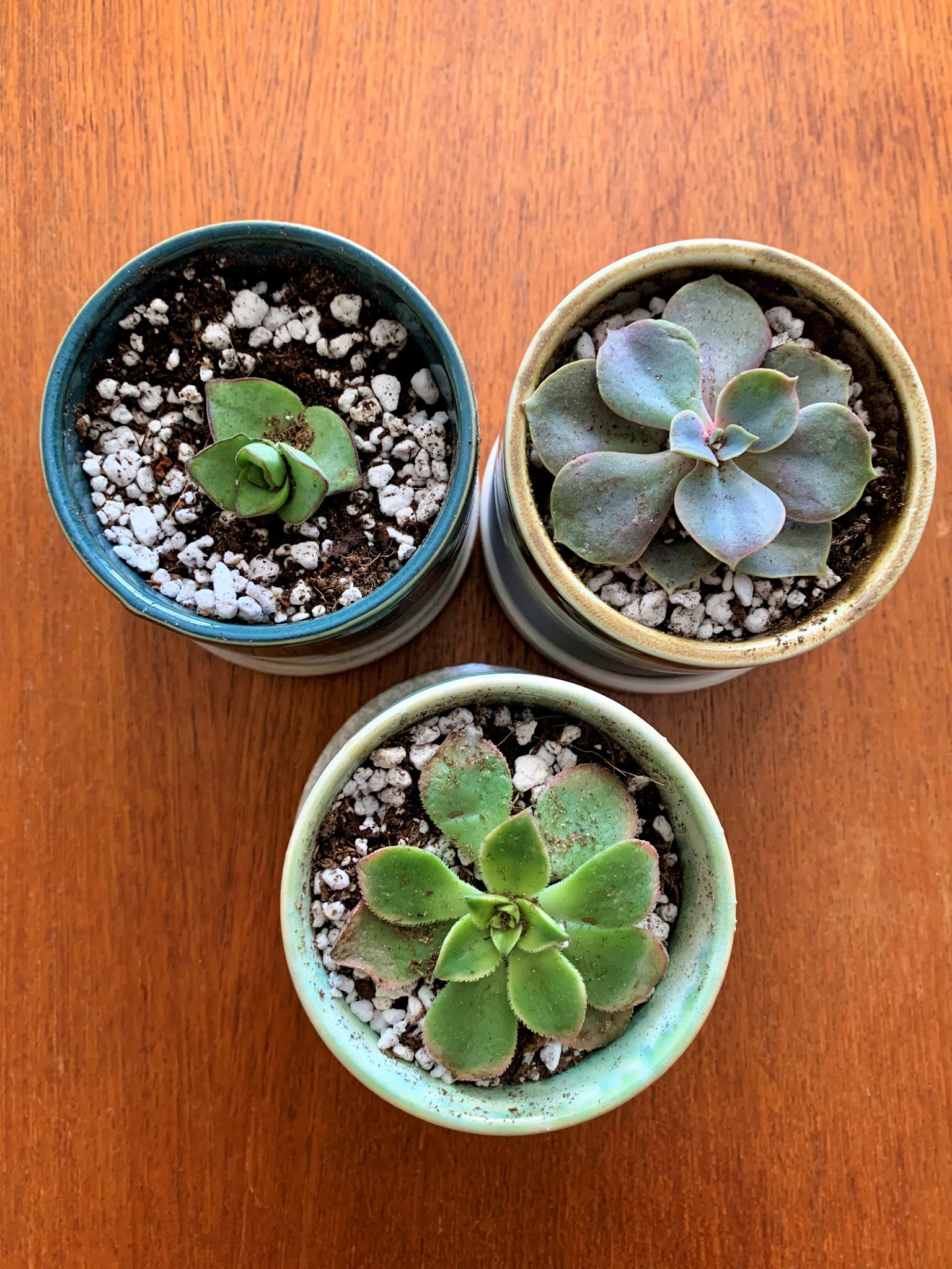 My Favorite Fall Home Decor Look: Potted Succulents: