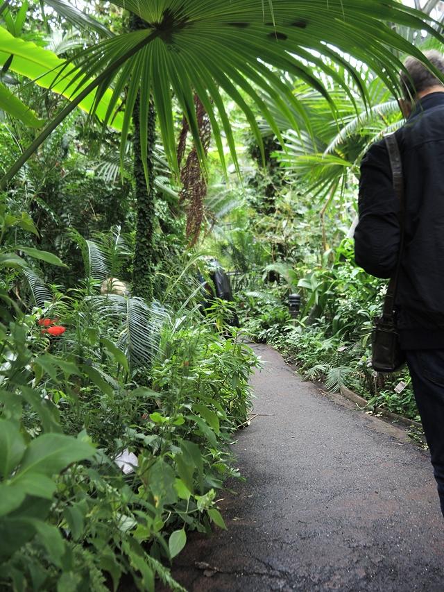 Amsterdam: Hortus Botanicus
