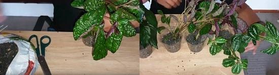 Insert plants in plastic pots