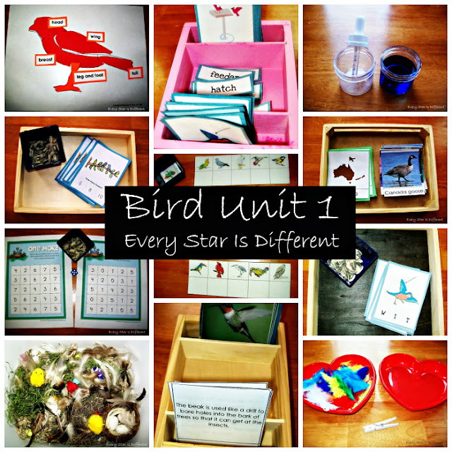 Bird Unit 1