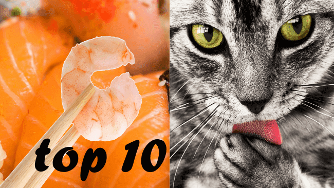 best-wet-cat-food_top-10