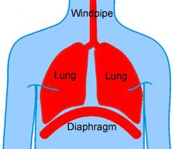 Hemidiaphragm - Right, Left, Paralysis, Treatment