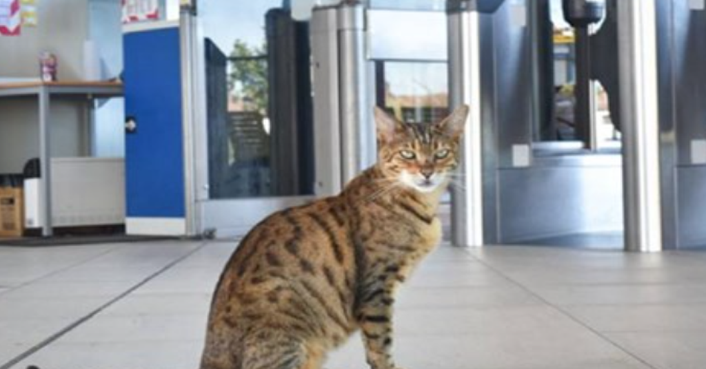 Every morning the cat comes to the station to chat with people