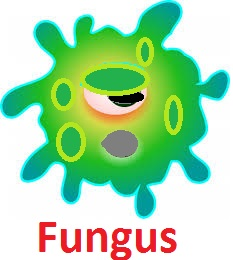 treatment-of-fungus-dandruff-hair fall