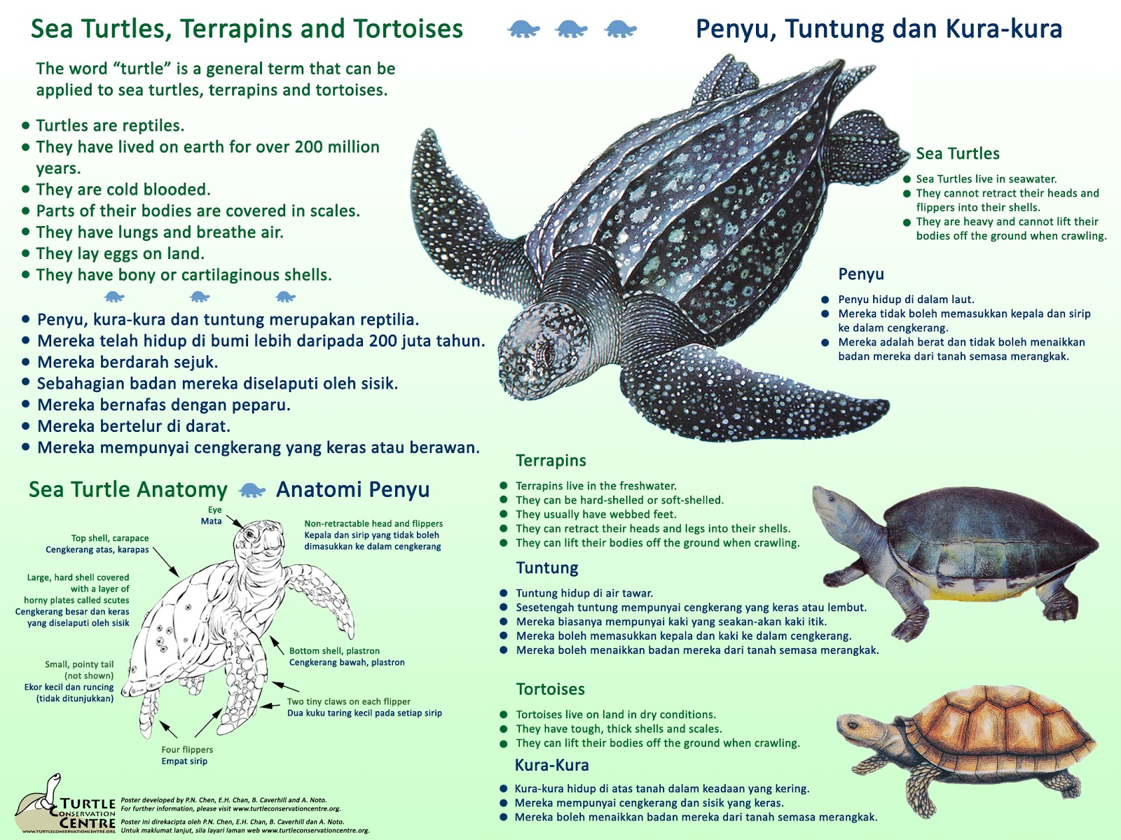 Redang Pelangi Resort Introduction To Turtles Sea Turtles Terrapins And Tortoises