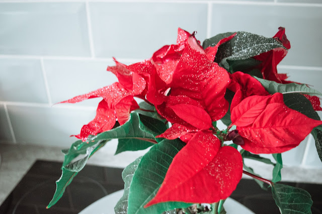 A poinsettia with plant-safe glitter