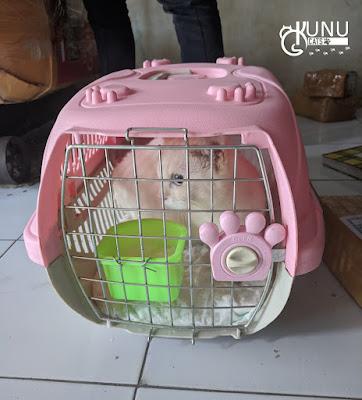 Rekber adopsi kucing