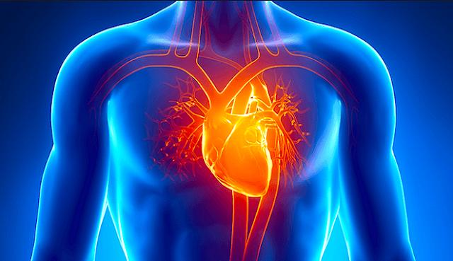Ada 8 Fakta Menakjubkannya Jantung dan bisa jadi bahan Belajar Anak-anak