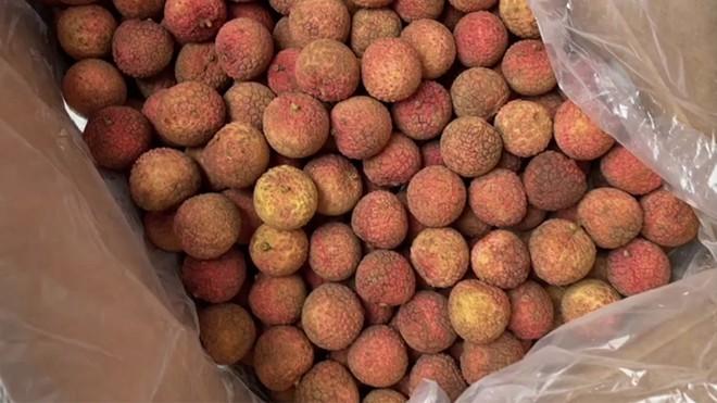 Vải thiều xuất khẩu theo đường biển từ Việt Nam sang Nhật Bản sau 16 ngày màu sắc vỏ quả vẫn tươi ngon.Ảnh Cục Bảo vệ thực vật cung cấp