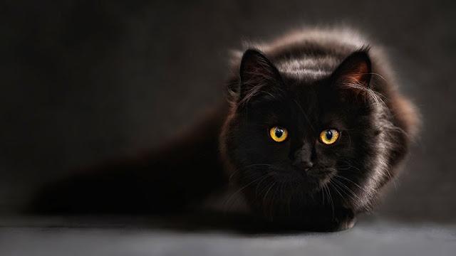 Un parásito propagado por los gatos ayuda a los humanos a ser más exitosos en los negocios