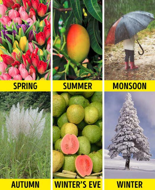 Nếu các nước khác trên thế giới chỉ có nhiều nhất 4 mùa thì Ấn Độ lại sở hữu đến tận 6 mùa một năm.    Mùa xuân: Giữa tháng 2 đến giữa tháng 4 Mùa hè: Giữa tháng 4 đến giữa tháng 6 Gió mùa: Giữa tháng 6 đến giữa tháng 8 Mùa thu: Giữa tháng 8 đến giữa tháng 10 Tiền đông: Giữa tháng 10 đến giữa tháng 12 Mùa đông: Giữa tháng 12 đến giữa tháng 2