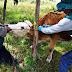 Senasa atendió a más de mil animales en jornada sanitaria
