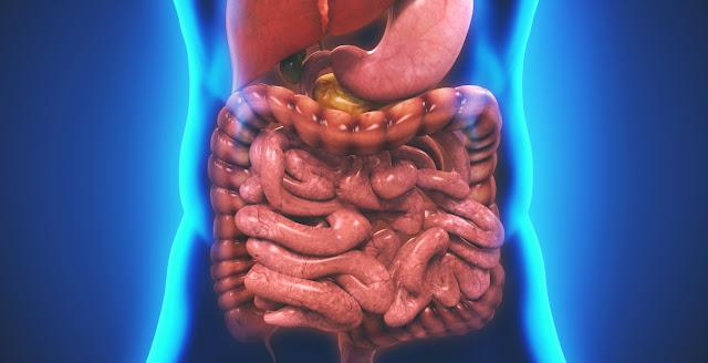 Thiếu hụt Enzyme làm giảm khả năng hấp thụ dinh dưỡng