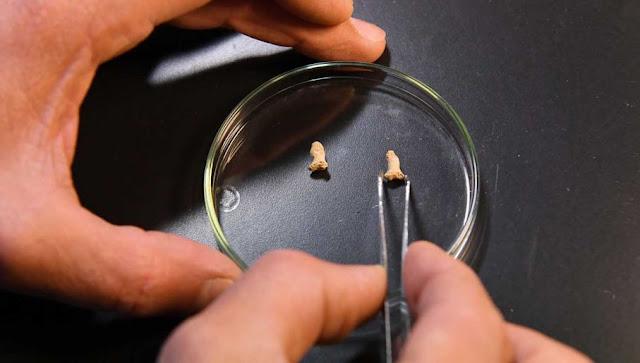 Neanderthal bones found in Polish cave