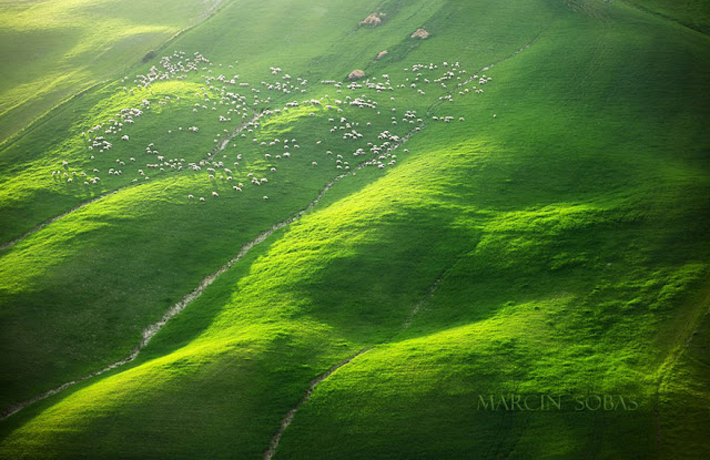 field-landscape-photography-only-sheep-marcin-sobas-tuscan-4.jpg