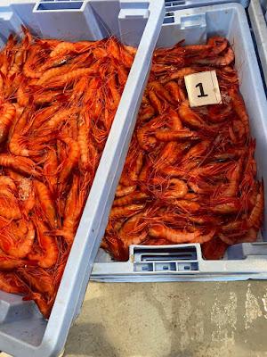 EQkBBCvXsAANoYx - Discriminación de la Dirección General de Pesca Sostenible del Ministerio de Agricultura, Pesca y Alimentación