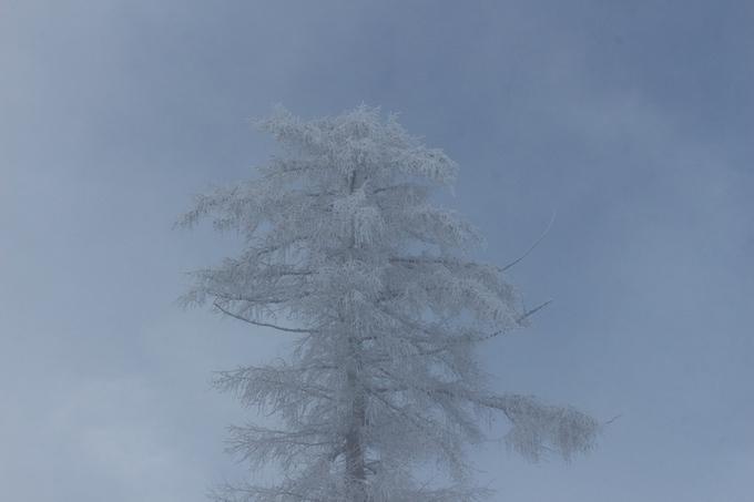 сняг, зима, снежна планина, зимен пейзаж, снежен пейзаж, снежно дърво, замръзнало дърво