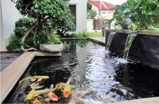 kolam koi sidoarjo