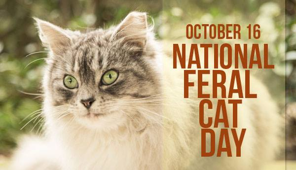 National Feral Cat Day Wishes Unique Image