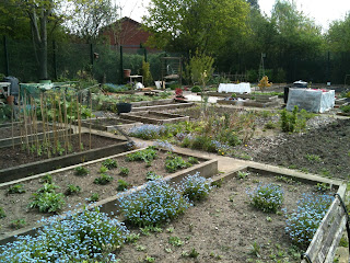 allotment, life on pig row