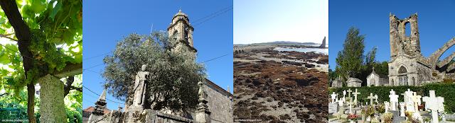 Viaje a Galicia: Viña de Albariño, Cambados: Igrexa de San Bieito, Torre San Sadurniño y Ruinas de Santa Mariña