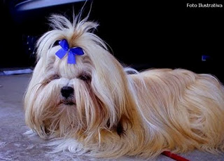Pet Shop Amigo Dos Animais Vendemos Varios Tipos De Cachorros