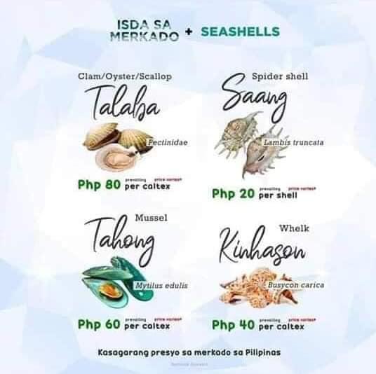 Seashells - Talaba, Saang, Tahong, Kinhason