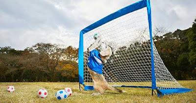 Purin, puede capturar pelotas con las patas
