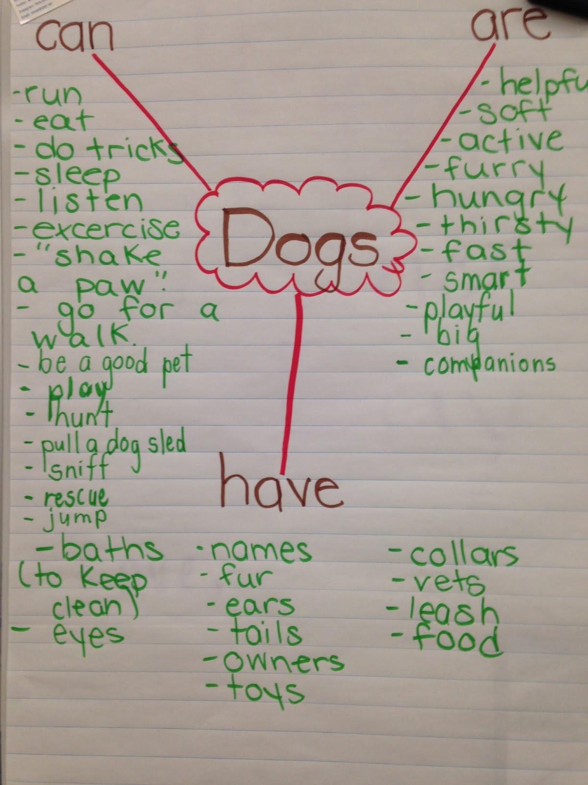 joy of learning animal inquiry part 3 brainstorming strategies