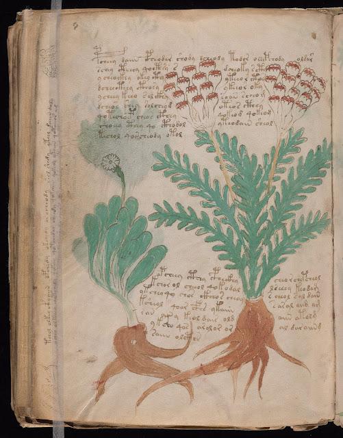 Voynich Elyazması - Bitki: Yaklaşık 113 ayrı bitkinin çizimi var kitapta ama işin ilginç tarafı bu 113 bitkinin hiçbiri tanıdık değil! Botanik Uzmanları ile de çalışmalar yapılmış ve herhangi bir benzerlik bulunamamış bilinen hiçbir bitkiyle...