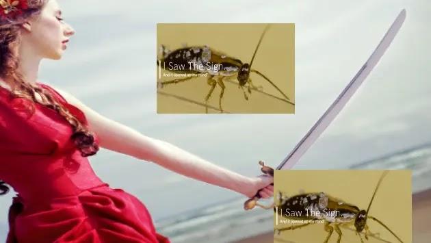 كيفية التخلص من الصراصير في البيت باسهل الطرق cockroaches