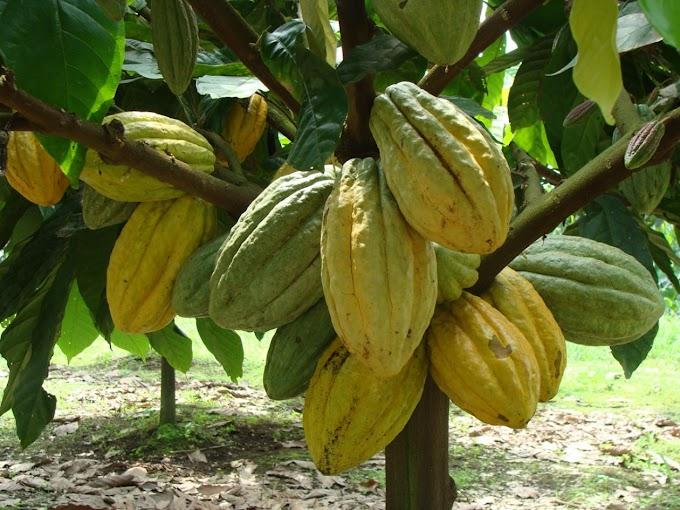 Día Internacional del Chocolate: 13 de septiembre